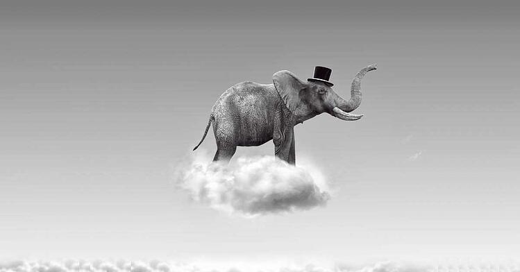 elephant-on-a-cloud-1